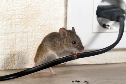 Pest Control in Shepperton, Upper Halliford, TW17. Call Now! 020 8166 9746